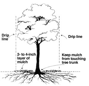 How To Fertilize Your Trees A Concord Carpenter